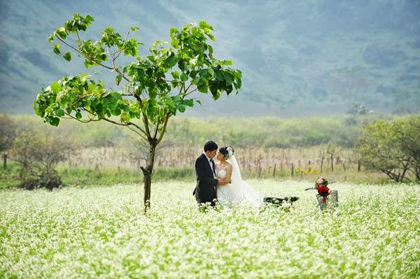 Cặp đôi đến cánh đồng hoa cải Mộc Châu chụp ảnh cưới