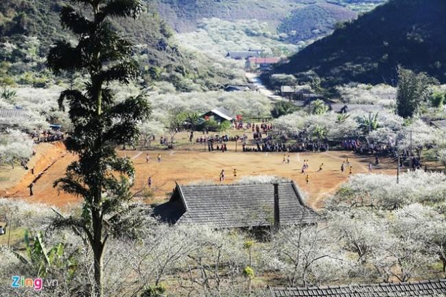 Hoa mận bao phủ lấy bản làng